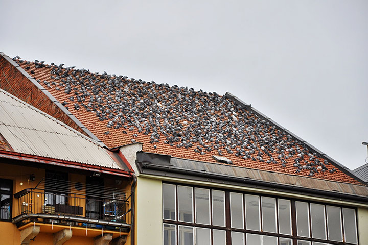 A2B Pest Control are able to install spikes to deter birds from roofs in Stoke Newington.