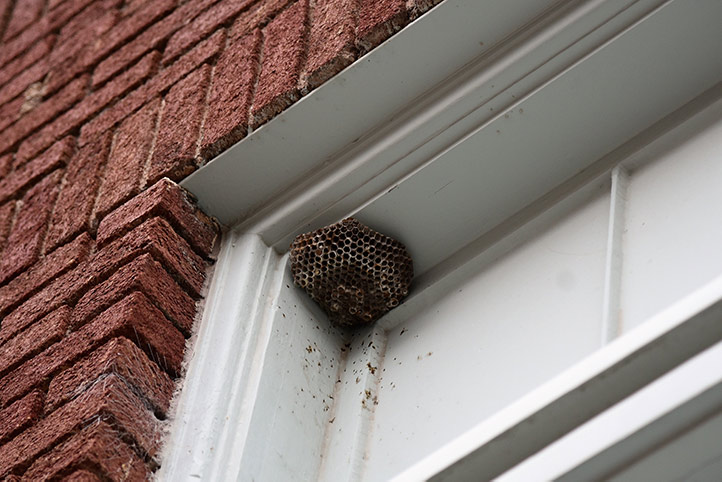 We provide a wasp nest removal service for domestic and commercial properties in Stoke Newington.